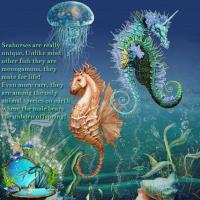 Unusual animals of the world- Seahorse