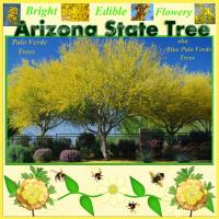 Arizona State Tree