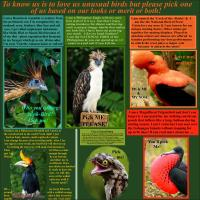 The Most Unusual & Weirdest Birds