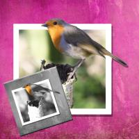 Robin FOR CHALLENG